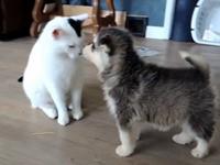 2 Welpen treffen auf eine sehr geduldige Katze
