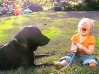 Babys lachen Hunde aus - Compilation