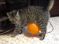 Ballon klebt an der Katze