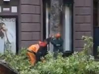 Baumfällarbeiten in der Innenstadt