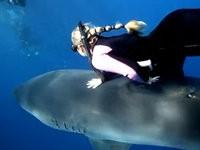 Blondine streichelt den Weissen Hai