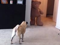 Böser Teddy erschreckt armen Hund
