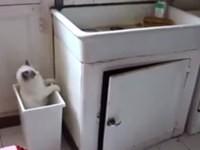 Cats Jump Fails Compilation 2014