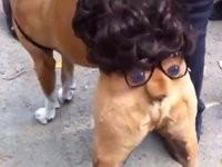Cooles Hundekostüm