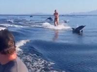 Delfin Surfing
