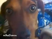 Dramatischer Hund