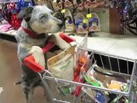 Ein Hund beim Shoppen