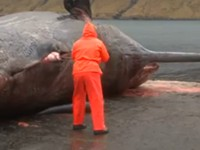 Explodierender Wal