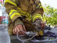 Feuerwehrmann rettet kleine Katze