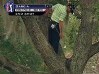 Golfer im Baum