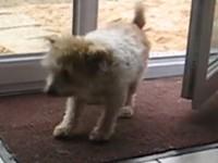 Gut erzogener Hund
