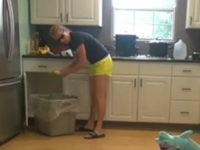 Haifisch in der Küche