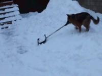 Hund beim Schnee schieben