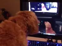 Hund bellt sich selbst an