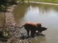 Hund fängt riesigen Fisch