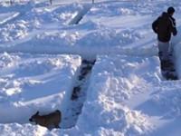 Hund im Schnee-Labyrinth