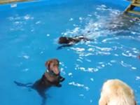 Hund kann nicht schwimmen