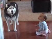 Hund macht Baby nach
