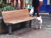 Hund macht komische Laute