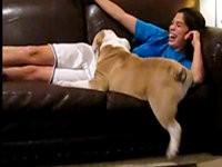 Hund möchte aufs Sofa