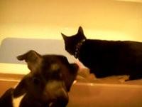 Hund schubst Katze in die Badewanne