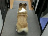 Hund schüttelt Hintern