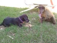 Hund und Affe und der Lutscher