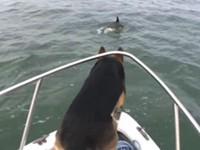 Hund will mit Delfinen spielen