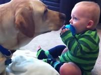 Hunde bringen Babys Kunststücke bei