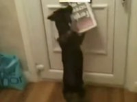 Hunde hassen Postboten - Compilation