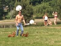 Hunde spielen mit Luftballons