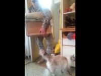 Katze begrüßt Herrchen