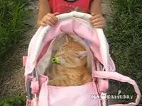 Katze denkt sie sei ein Baby