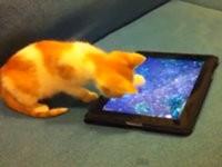 Katze fischt frische Fische