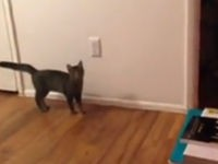 Katze geht die Wand hoch
