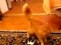 Katze hasst Mario