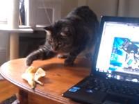 Katze hat Angst vor Banane