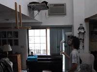 Katze hilft Herrchen beim Jonglieren