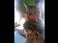 Katze liebt Pizza
