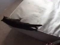 Katze macht Herrchen das Bett