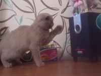 Katze mag keinen Subwoofer