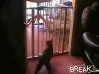 Katze mit Überschlag