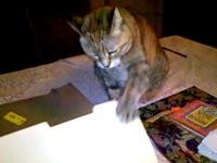 Katze mit viel Ausdauer