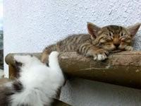 Katze nervt ihre schlafende Schwester