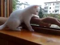 Katze rettet Hand