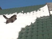 Katze rutscht vom Dach
