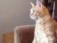 Katze sieht etwas spannendes