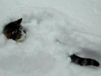 Katze versteckt sich im Schnee