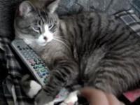 Katze verteidigt ihre Fernbedienung