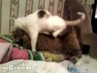 Katze will Katze starten